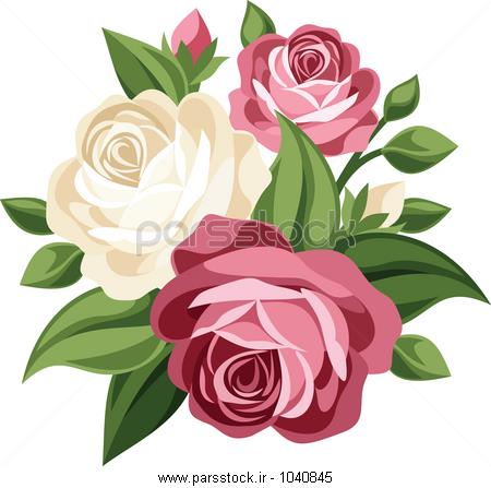 عکس+گل+رز+صورتی