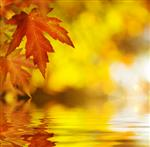 Fall.Autumn سابقه و هدف