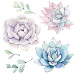 watercolor flowers set It